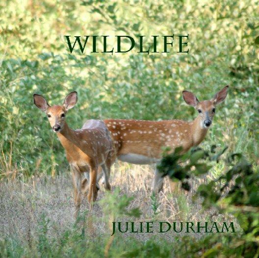 View wildlife by juliedurham