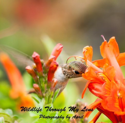 View Wildlife Through My Lens by April