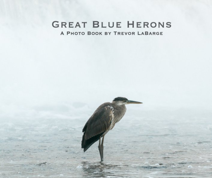 View Great Blue Herons by Trevor LaBarge