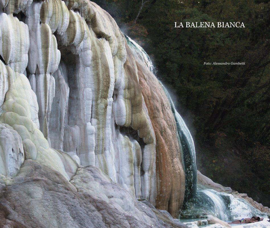 Visualizza LA BALENA BIANCA di Foto: Alessandro Gambetti