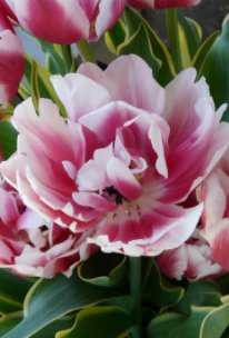 Floral Journal - Home & Garden pocket and trade book