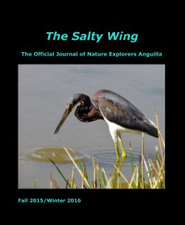 The Salty Wing Fall 2015/Winter 2016 - Education photo book