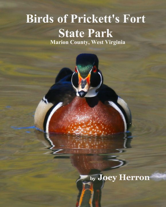 View Birds of Prickett's Fort State Park    Marion County, West Virginia by Joey Herron