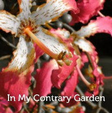 In My Contrary Garden - Arts & Photography Books photo book