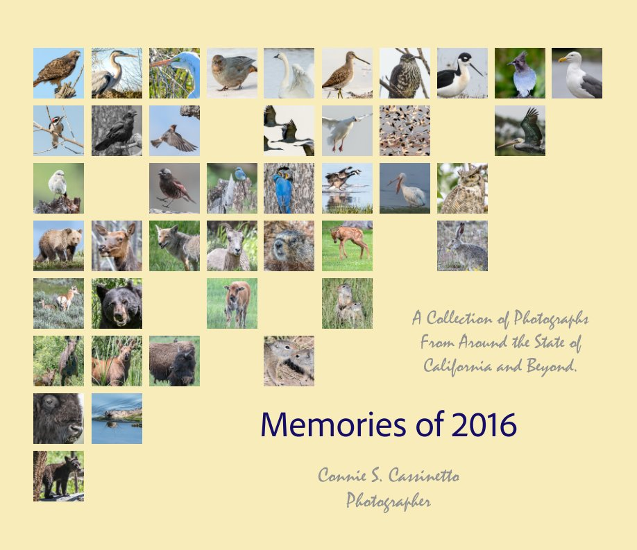 View Memories of 2016 by Connie Cassinetto