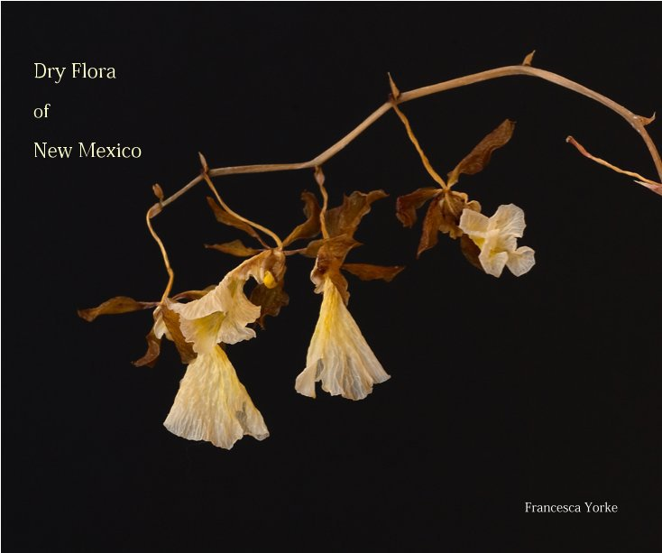 View Dry Flora by Francesca Yorke