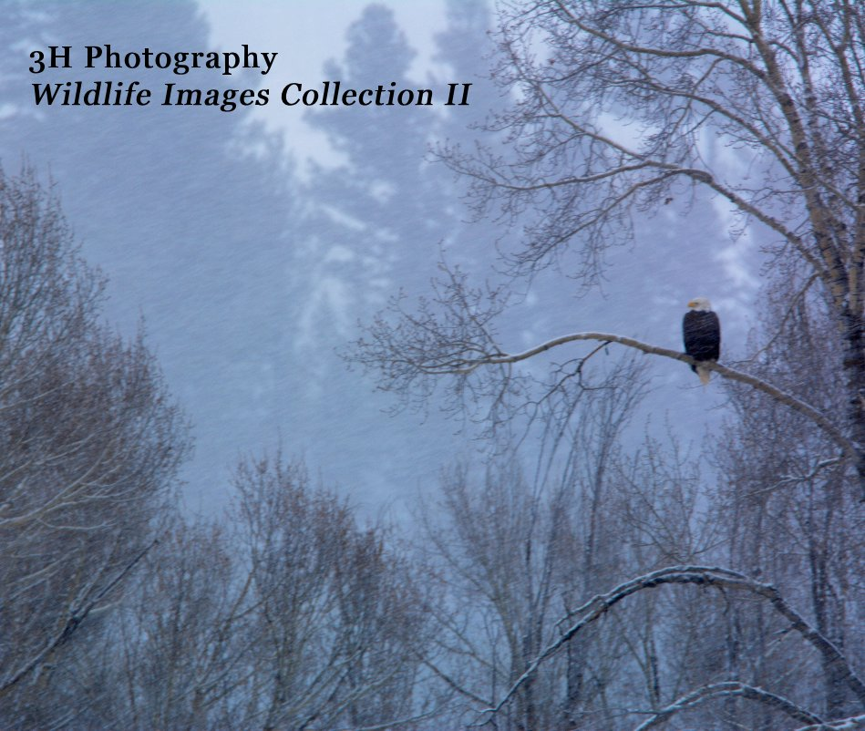 View 3H Photography Wildlife Images Collection II by Wayne Hassinger