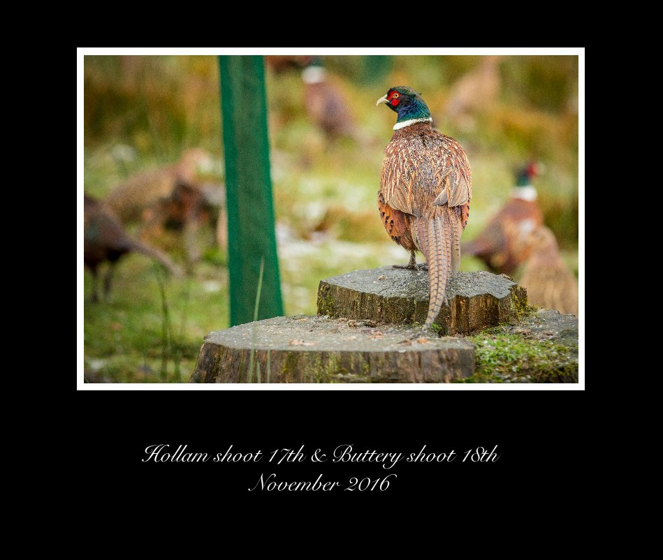 View Hollam shoot 17th & Buttery shoot 18th November 2016 by dean mortimer