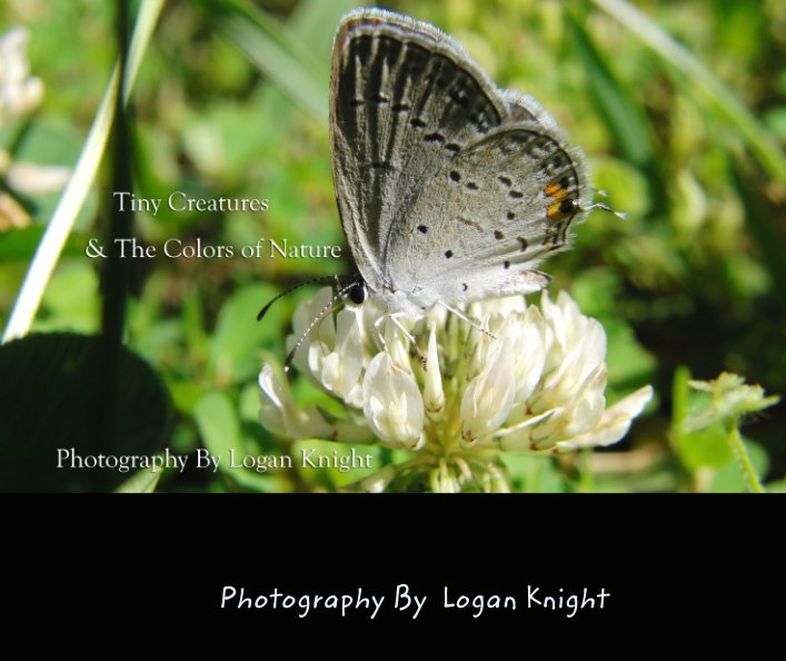 View Tiny Creatures & The Colors of Nature by Photography By  Logan Knight