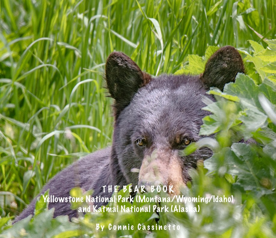 View THE BEAR BOOK by Connie Cassinetto