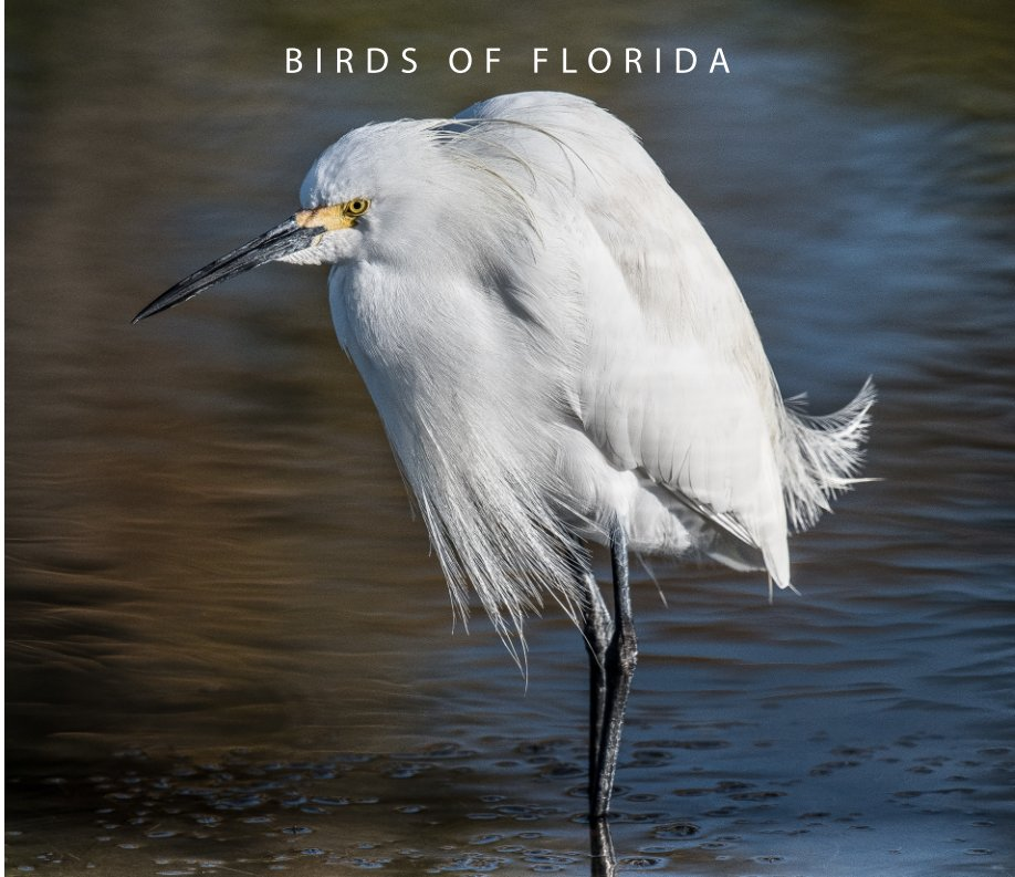 View Birds of Florida by Connie Cassinetto