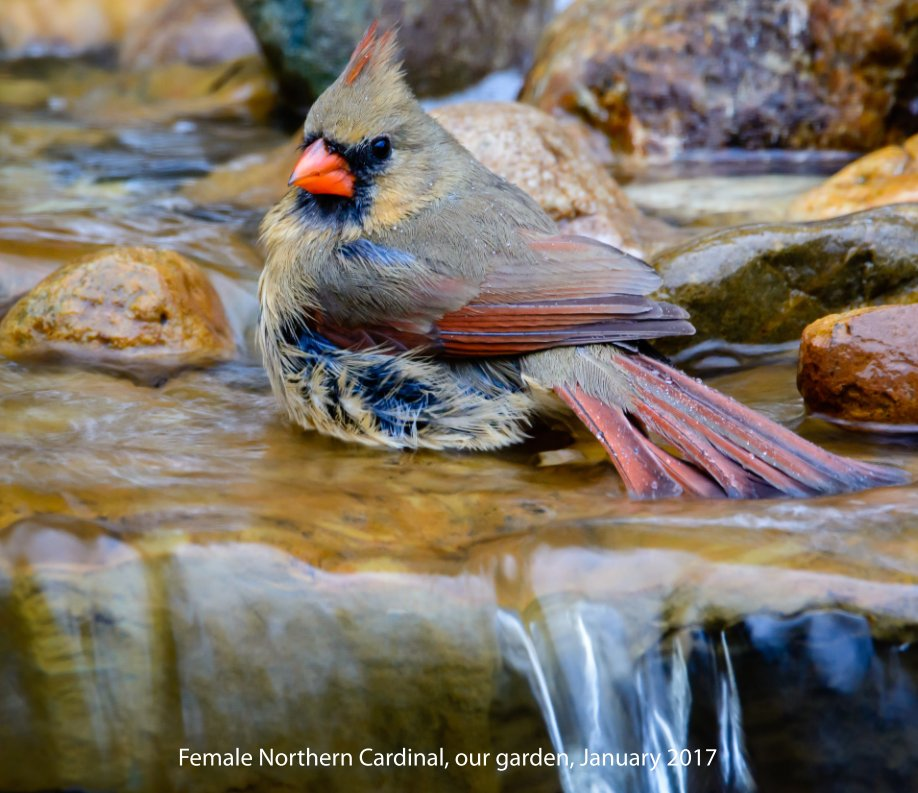 View Birds-The Eyes Have It by walter ballard