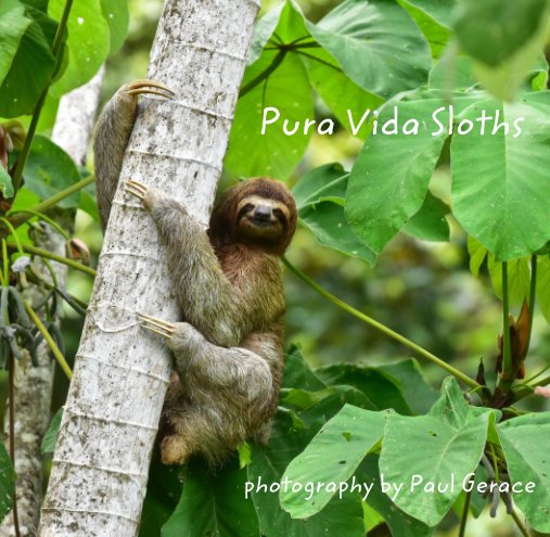 View Pura Vida Sloths               photography by Paul Gerace by Paul Gerace