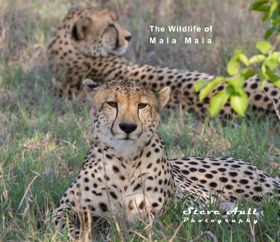 View The Wildlife of Mala Mala by Steve Ault