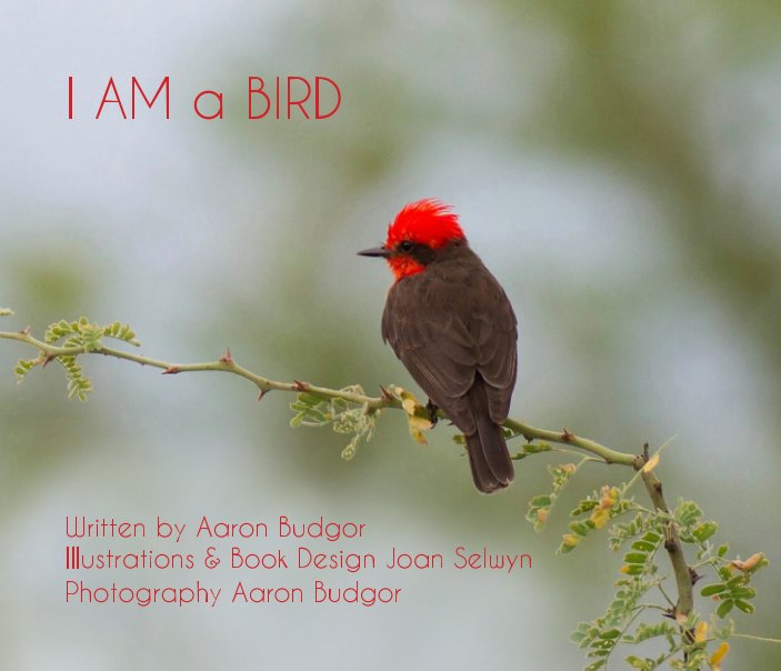 View I AM A BIRD by Aaron Budgor   Joan Selwyn