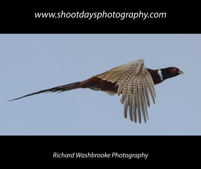 View Shoot Days Photography by Richard Washbrooke