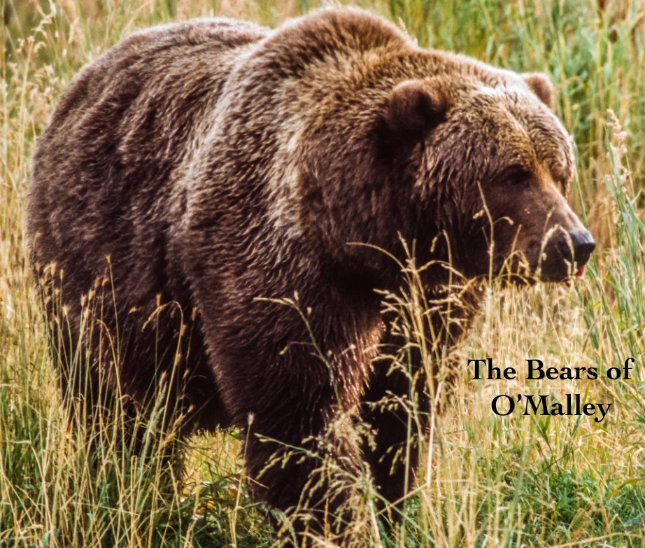 View The Bears of O'Malley by J. Lundblad
