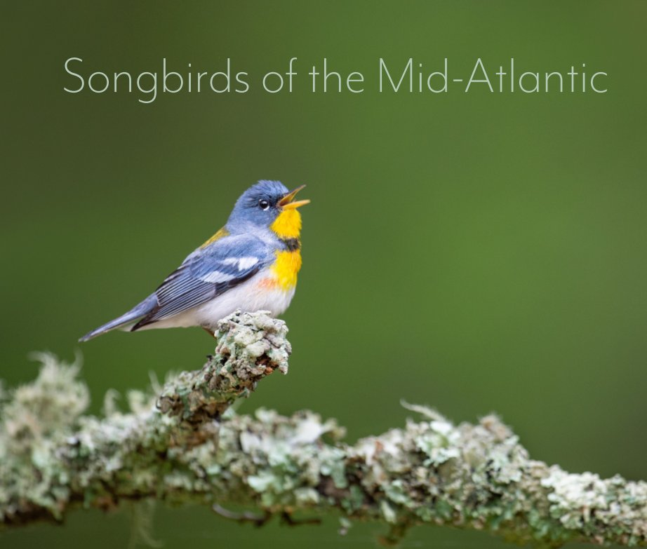 View Songbirds of the Mid-Atlantic by Ray Hennessy and Scott Keys