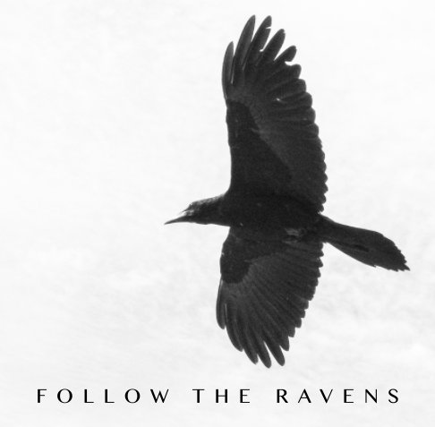 View Follow The Ravens by Brian Kaufman