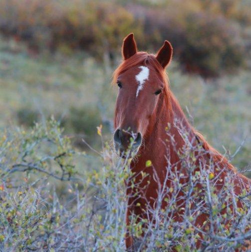 View Equine Portraiture - Petite Volume Three by Jordan Wunderlich