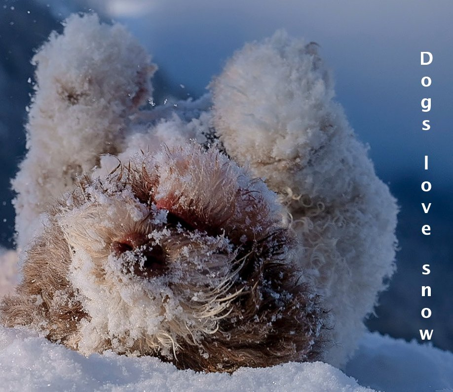 View Dogs love snow by Petra Saf Photohgraphy