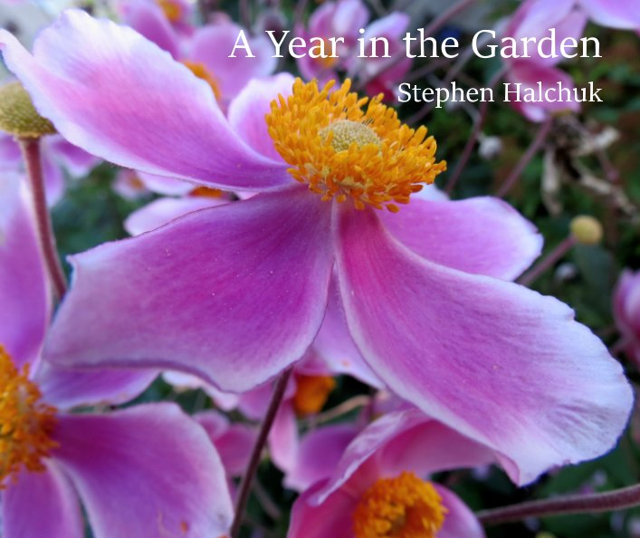 View A year in the Garden by Stephen Halchuk