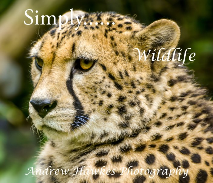 View Simply, Wildlife by Andrew Hawkes MVO RVM