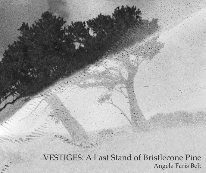 View Vestiges by Angela Faris Belt
