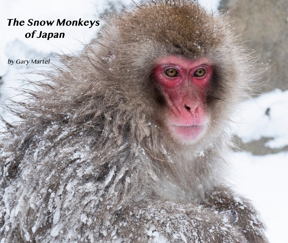 View The Snow Monkeys of Japan by Gary Martel
