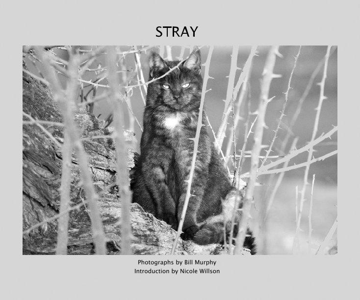 View Stray by Bill Murphy