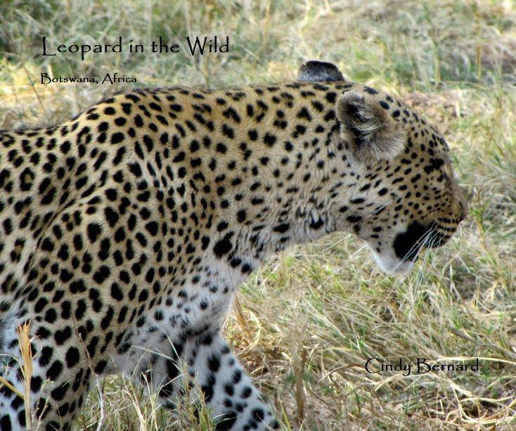 View Leopard in the Wild by cjbern65