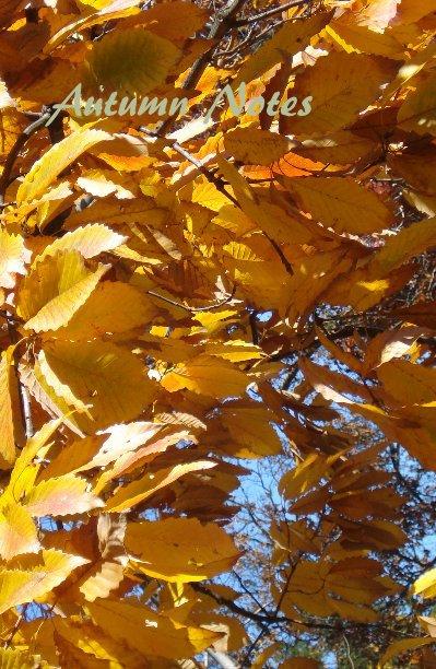 View Autumn Notes by mezzo213