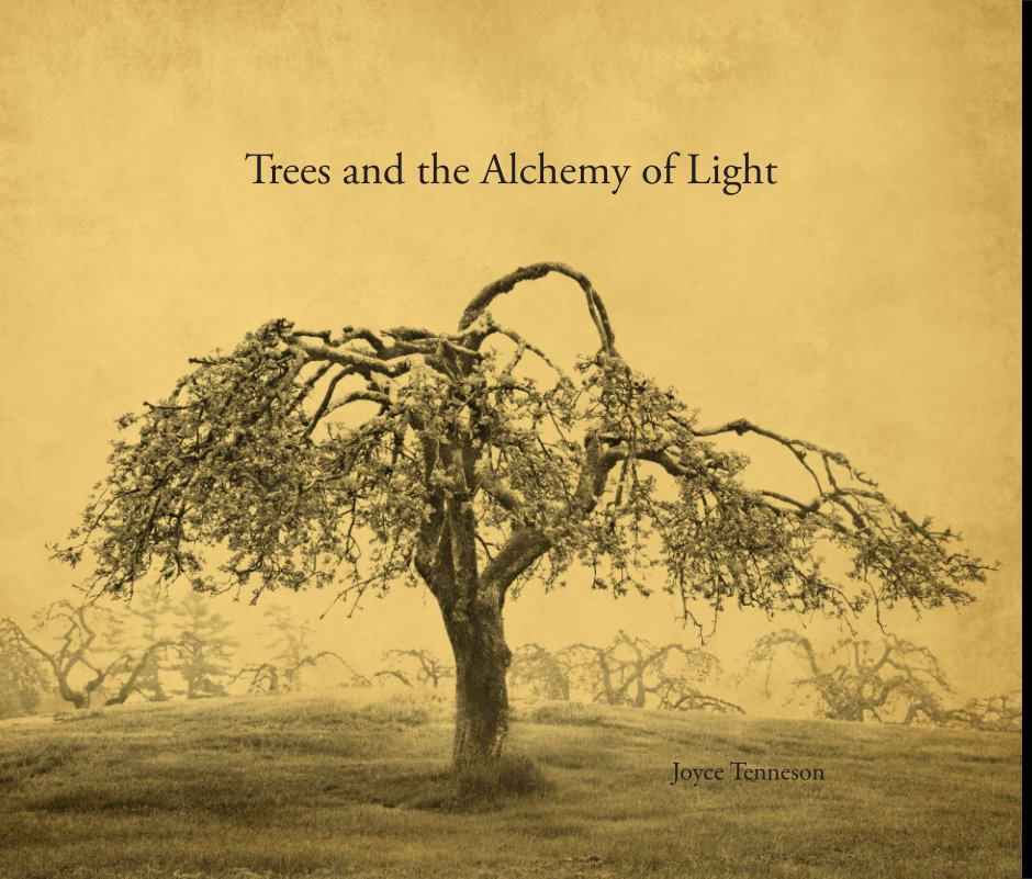 View Trees and the Alchemy of Light by Joyce Tenneson