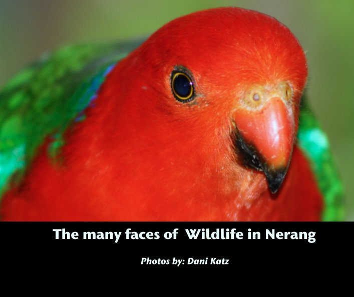 View The many faces of  Wildlife in Nerang by Photos by: Dani Katz
