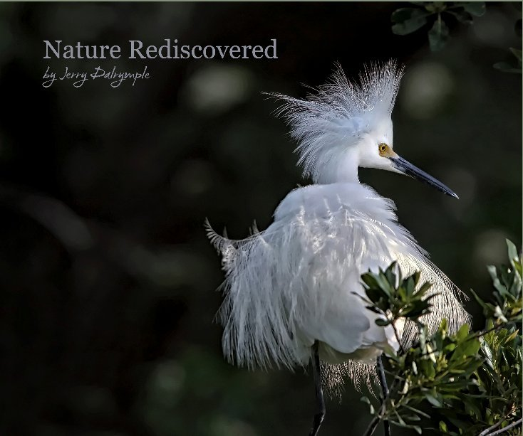 View Nature Rediscovered by Jerry Dalrymple