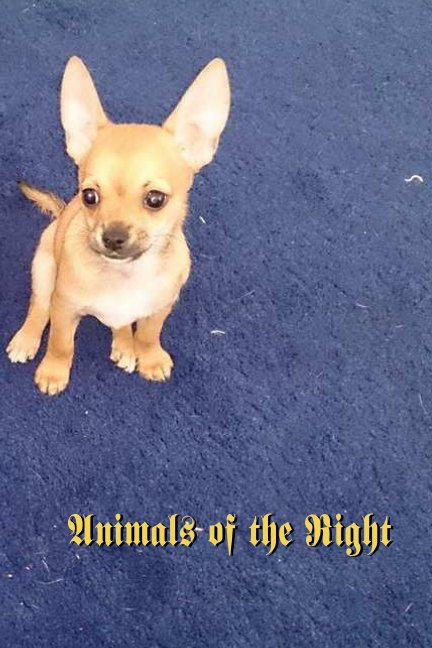 View Animals of the Right by M Downing