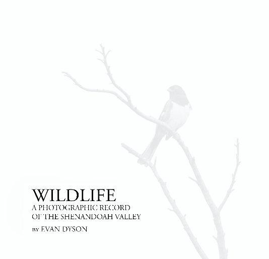 View Wildlife – Shenandoah Valley by Evan Dyson