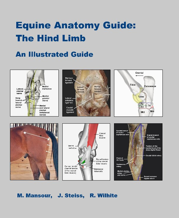 View Equine Anatomy Guide: The Hind Limb by M. Mansour, J. Steiss, R. Wilhite