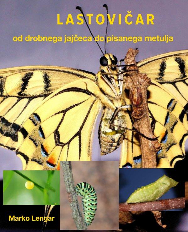 View LASTOVIČAR (Papilio machaon) by Marko Lengar