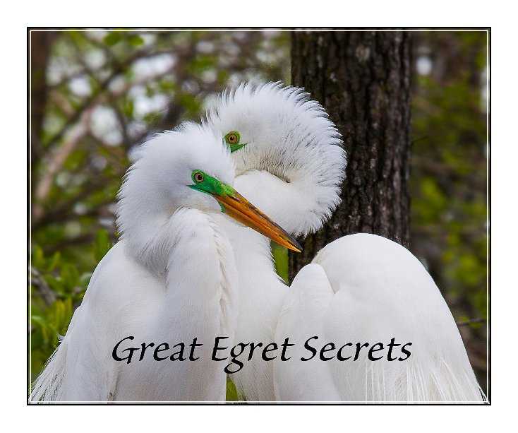 View GREAT EGRET SECRETS by BETH & WILLIAM TETTERTON