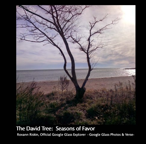 View The David Tree:  Seasons of Favor by Roxann Riskin Official Google Glass Explorer