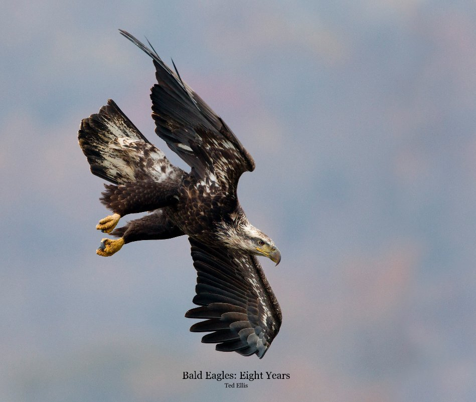 View Bald Eagles: Eight Years Ted Ellis by Ted Ellis