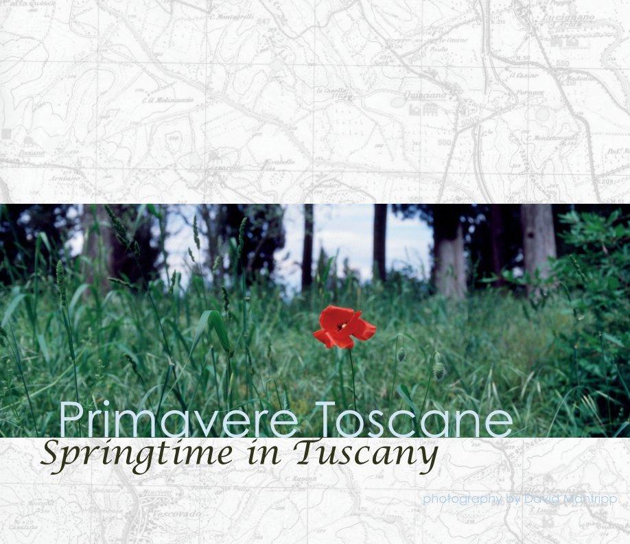 View Primavere Toscane by David Mantripp