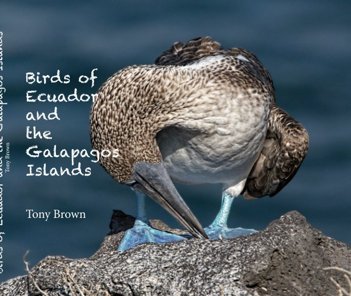 View Birds of Ecuador and Galapagos by Tony Brown