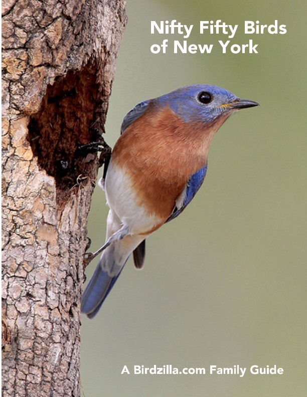 View Nifty Fifty Birds of New York by Sam Crowe