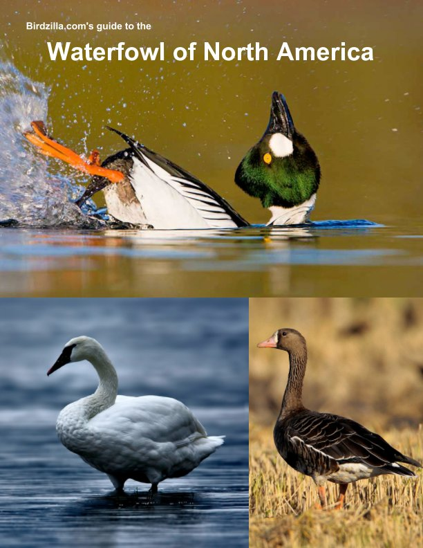 View Waterfowl of North America by Sam Crowe