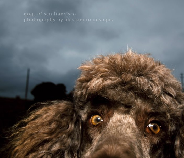 View Dogs of San Francisco by Alessandro Desogos Photography