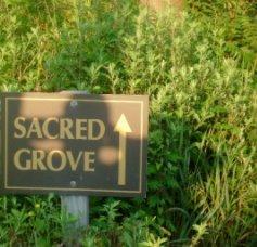 Sacred Grove book cover