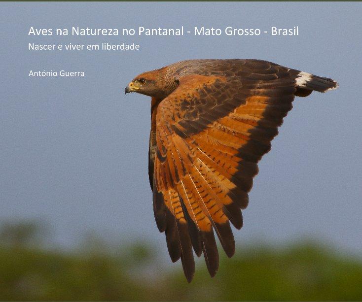 Ver Aves na Natureza no Pantanal - Mato Grosso - Brasil por António Guerra