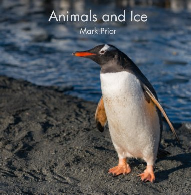 Animals and Ice book cover